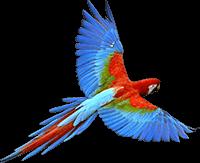 Presse Papagei